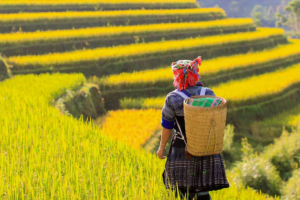 Mu Cang Chai - A breathtaking attraction to explore