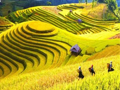 Sapa has attracted a lot of visitors for its outstanding values