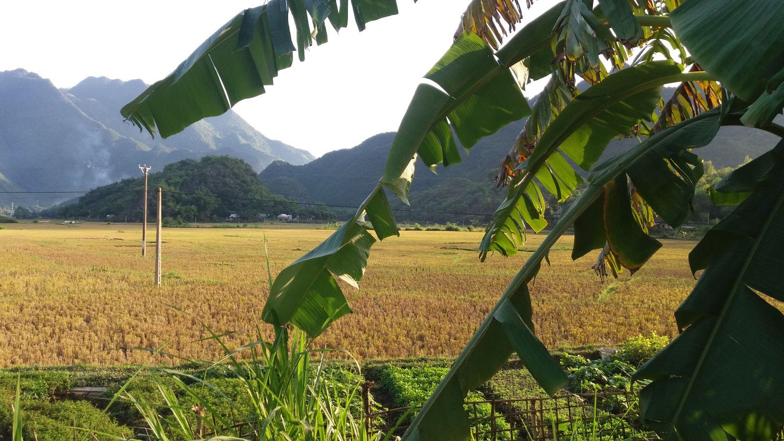Mai Chau valley- Moc Chau