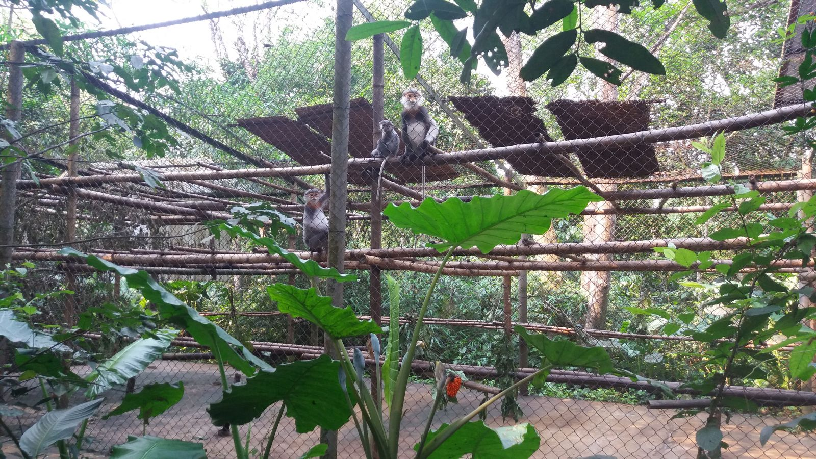 Cuc Phuong National Park- monkey