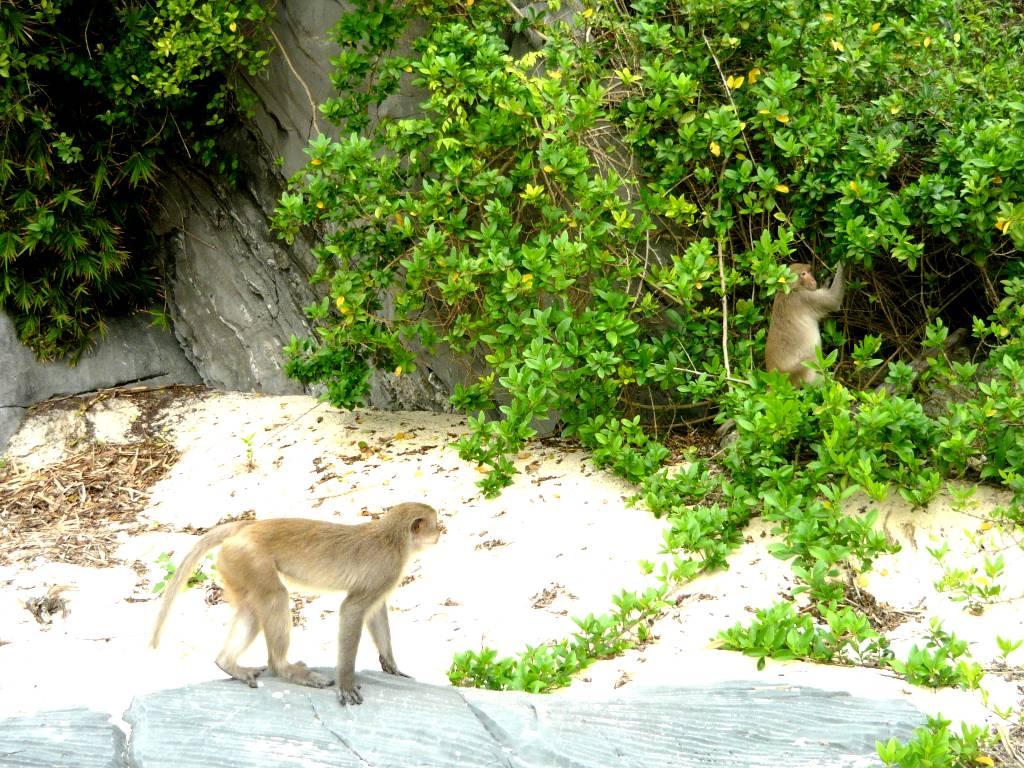 Catba monkey island