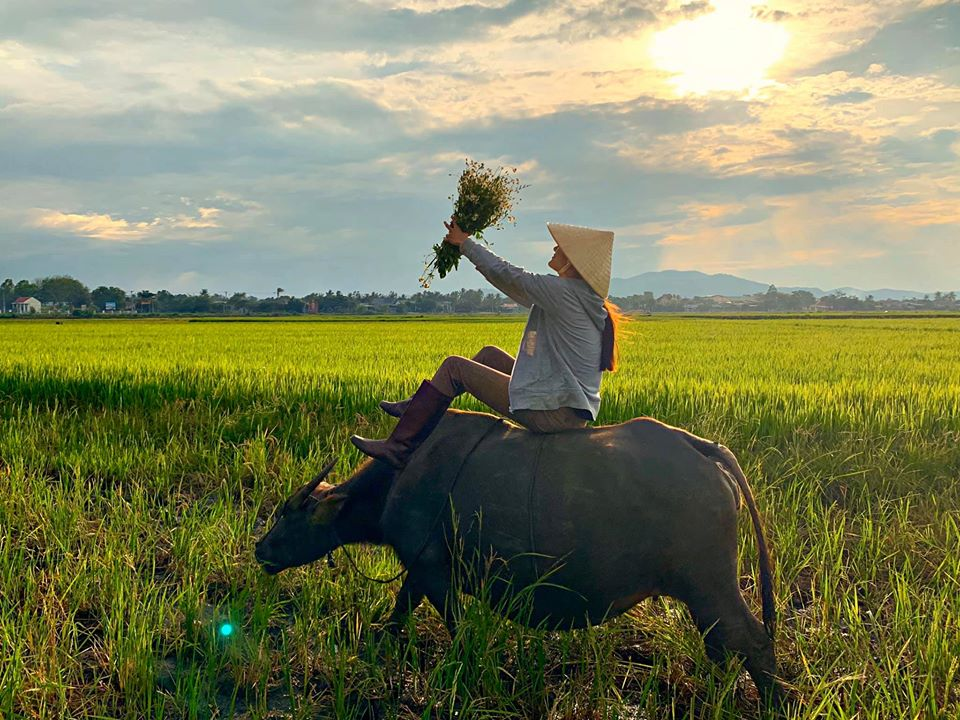 Buffalo riding -VN