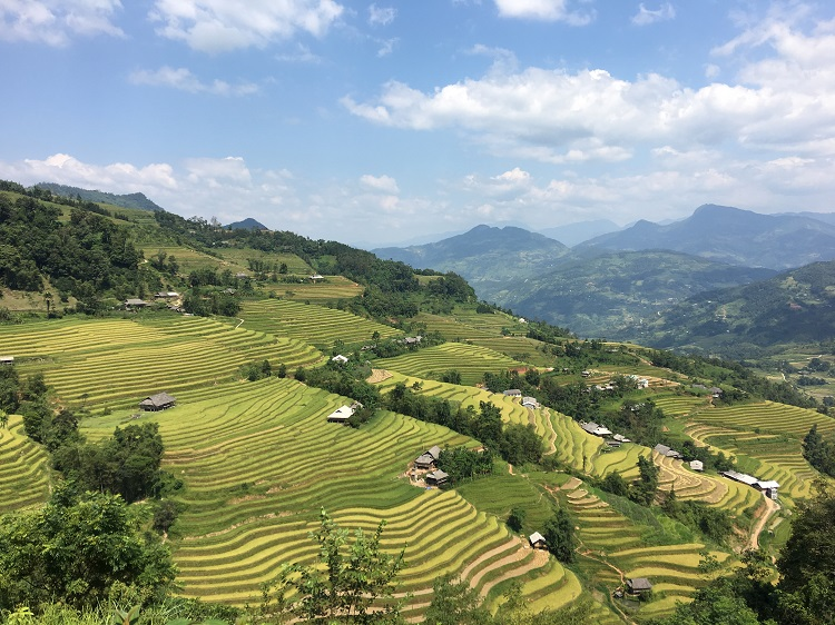nam Ai rice terraces