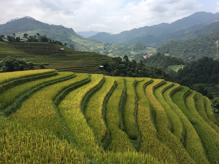 Rice terraces in Mu Cang Chai