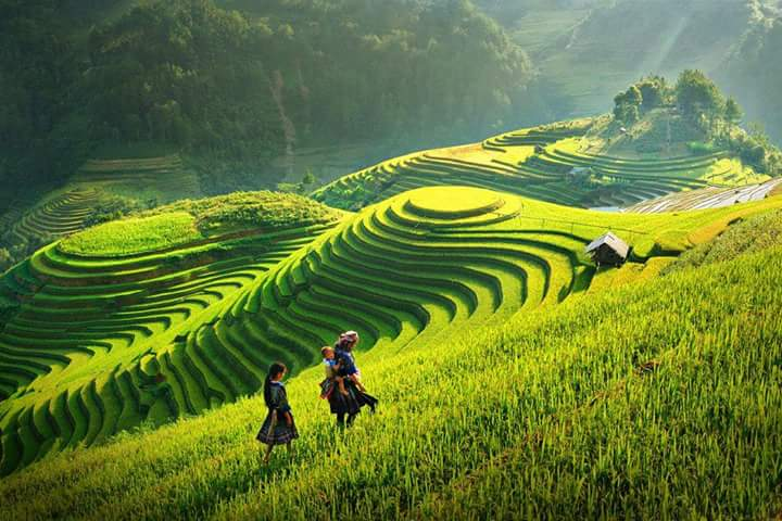 Stepped fields in Mu Cang Chai