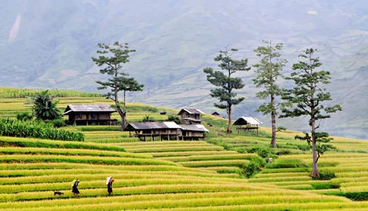 Terraces in Mu Cang Chai