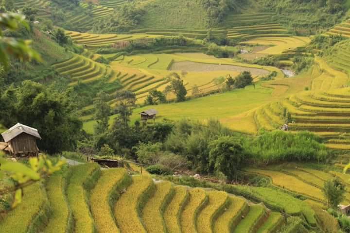 Mu Cang Chai trekking tour- rice fields