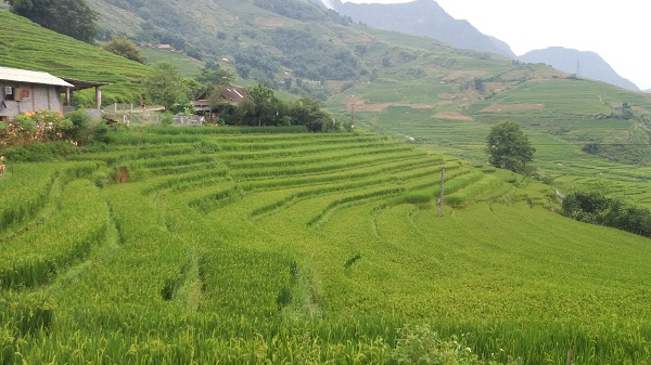 North Vietnam Tour to Sapa