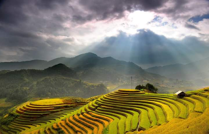 North Vietnam Tour to Mu Cang Chai terrace fields