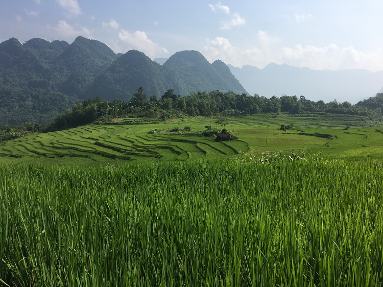 Rice terraces in Ban Don - Pu Luong