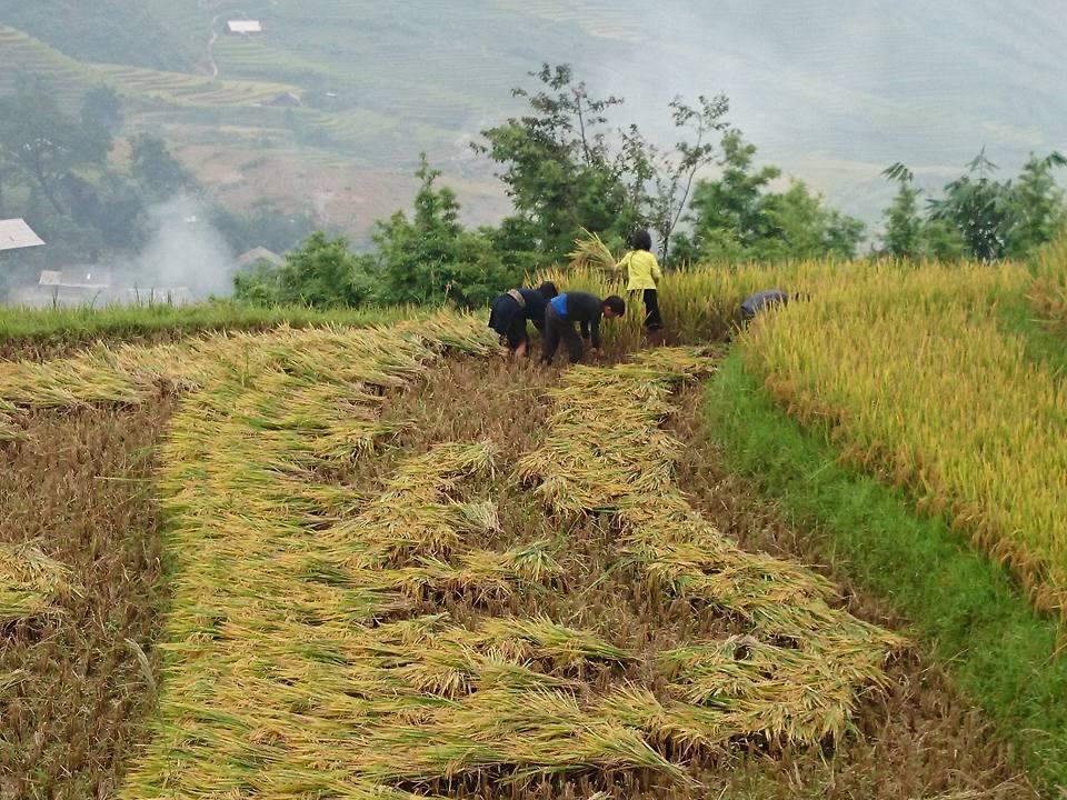 Sapa Vietnam 2
