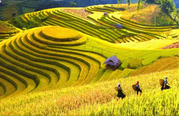 Vietnam adventure tour - terrace fields