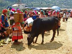 Sapa Travel Guide-Can Cau Market10