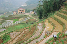 Sapa Travel Guide- Catcat