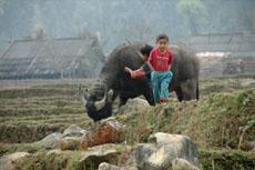 Sapa Tours-Giang Ta Chai Village1