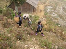 Sapa Tours-Ban Pho Village