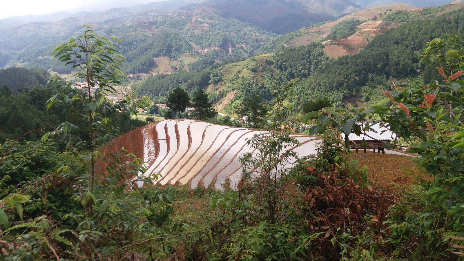 mucangchai trekking trip-rice fields