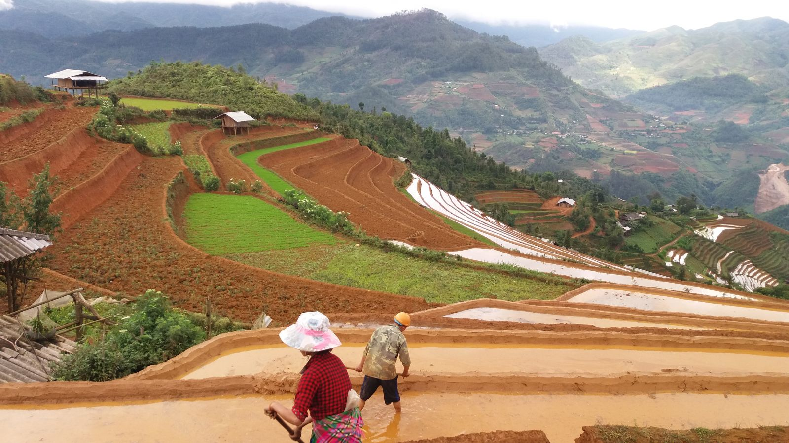 Farm work in Mu Cang Chai rice terraces