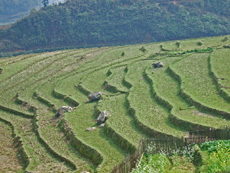 Vietnam Holiday Packages- Sapa Villages