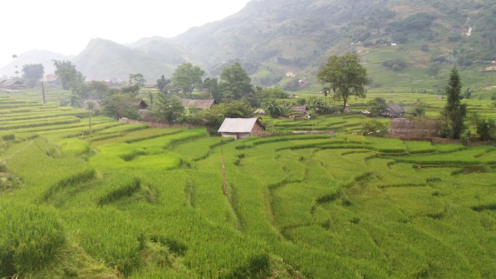 Sapa tour - rice terraces